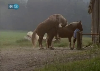 Cute horses are getting pleasure from hard sex