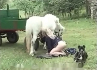 Animal cocks sucked by a beautiful zoophile